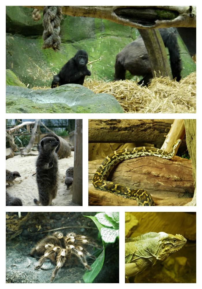 chessington-animals
