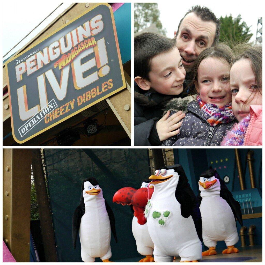 chessington-penguins-show