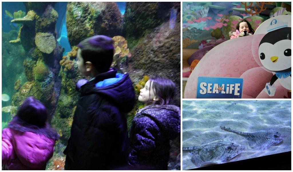 chessington-sealife