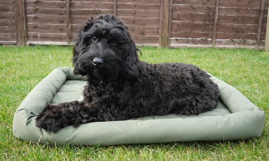 dog-bed-berkley