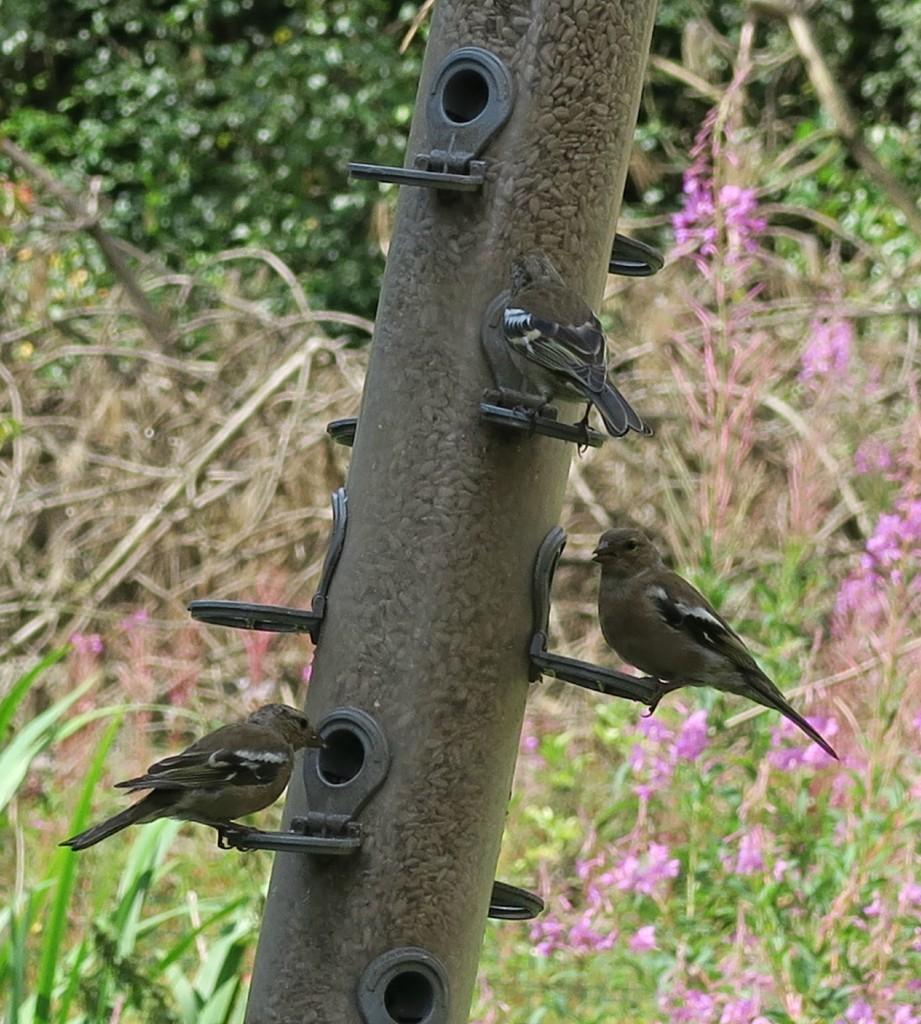 sherwood-forest-birds-feeding