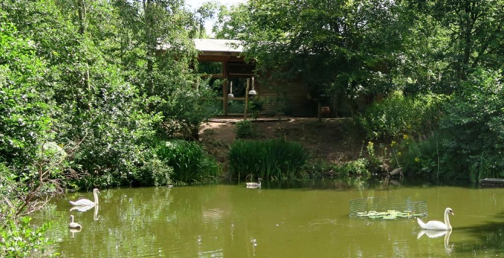 sherwood-forest-swan-lake