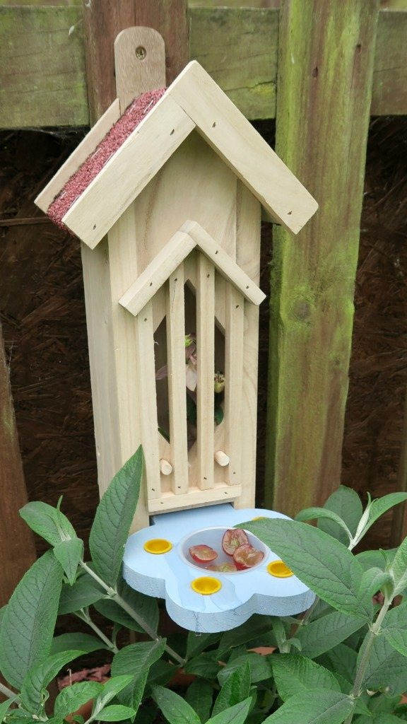 suttons-butterfly-house-3