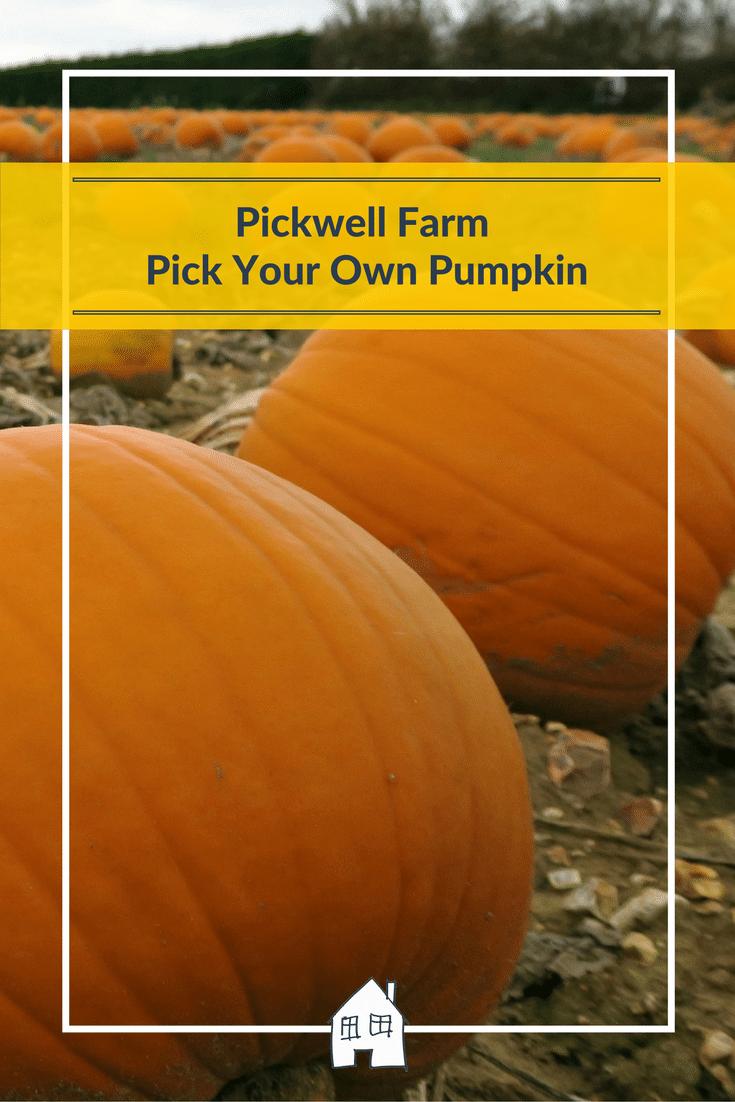 pumpkin-farm