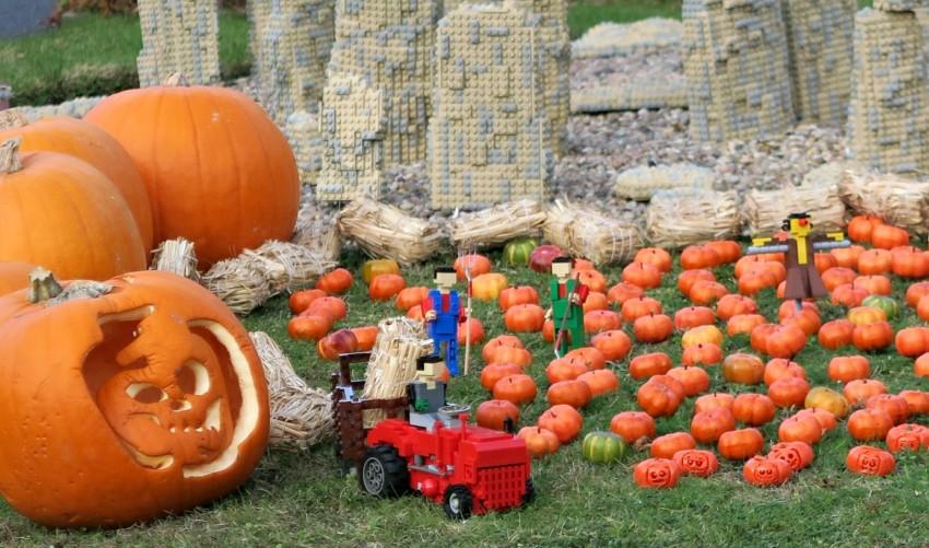 legoland-pumpkins-close