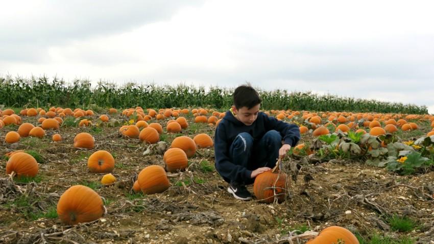 pumpkin-field-10