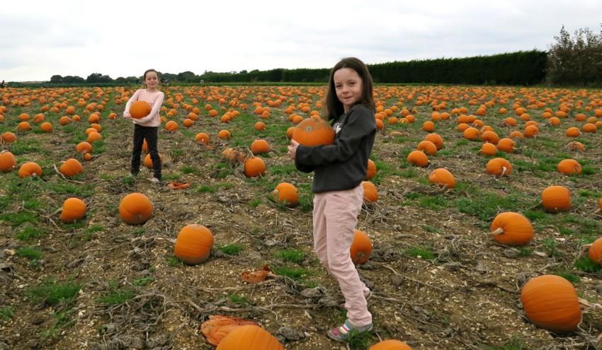 pumpkin-field-12