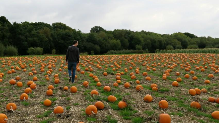 pumpkin-field-4