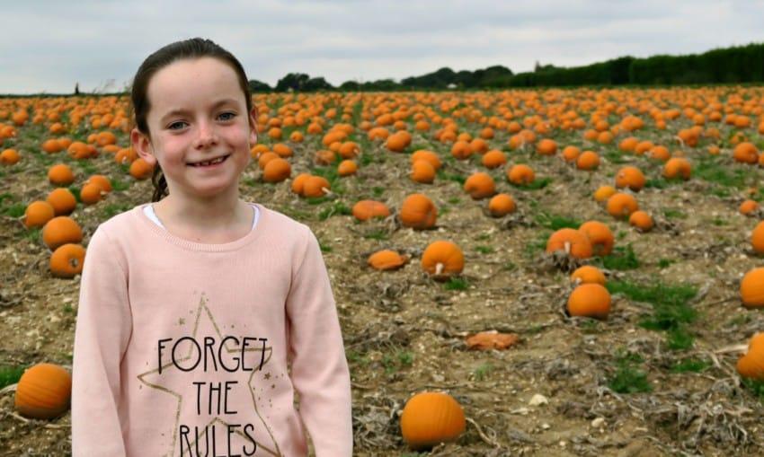 pumpkin-field-6