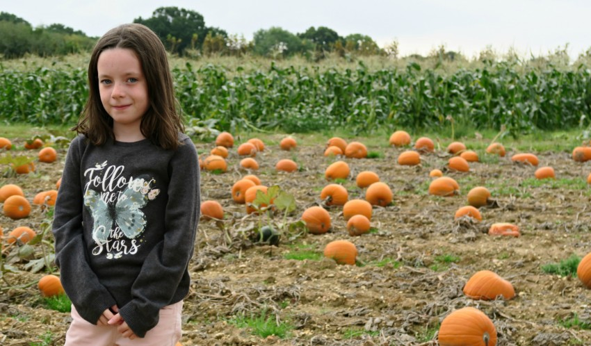 pumpkin-field-7