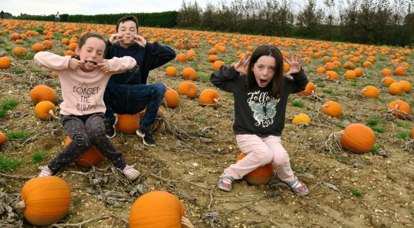 pumpkin-field-9