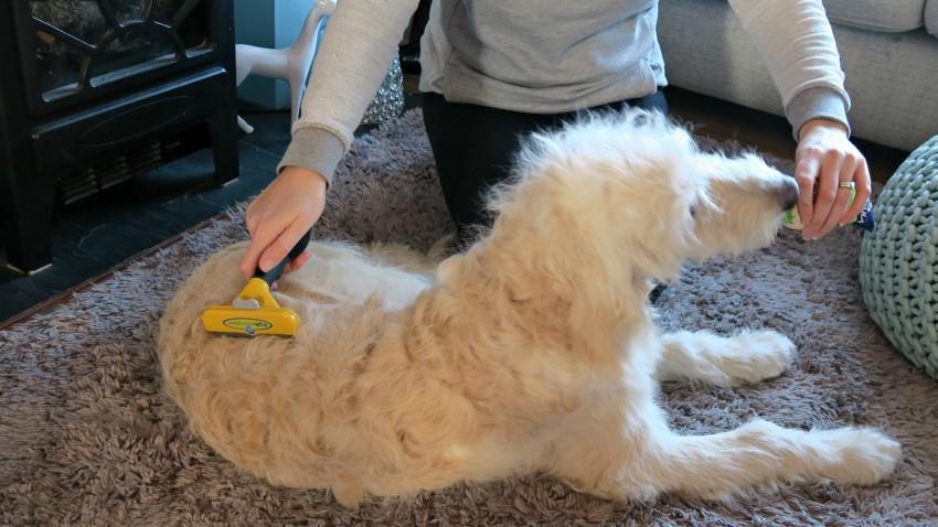 grooming-routine-7