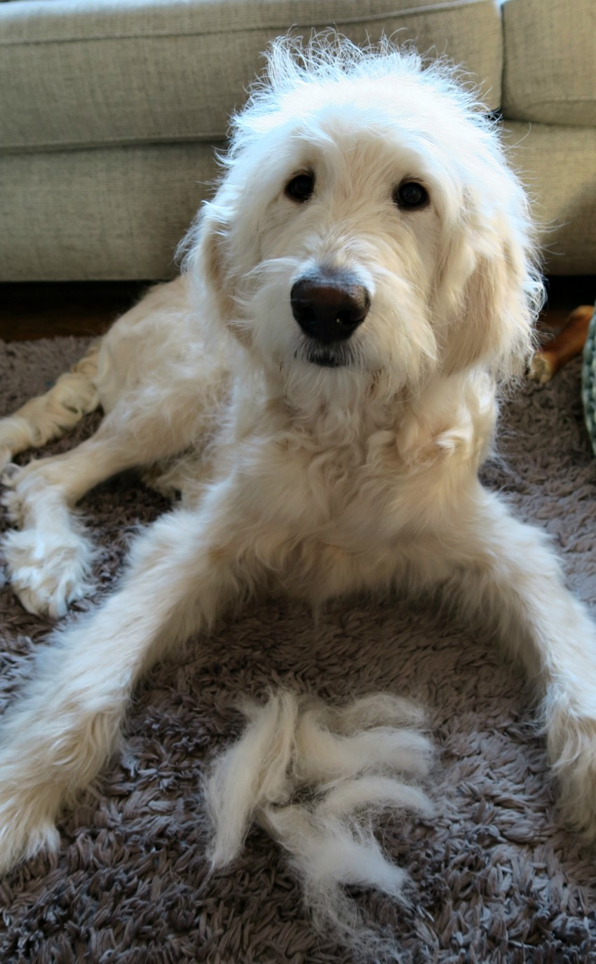 grooming-routine-8