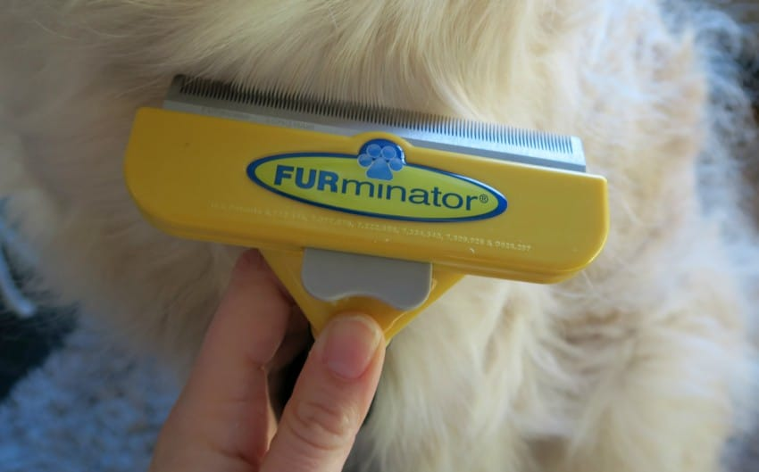 Grooming routine using the FURminator and muddy dog walks