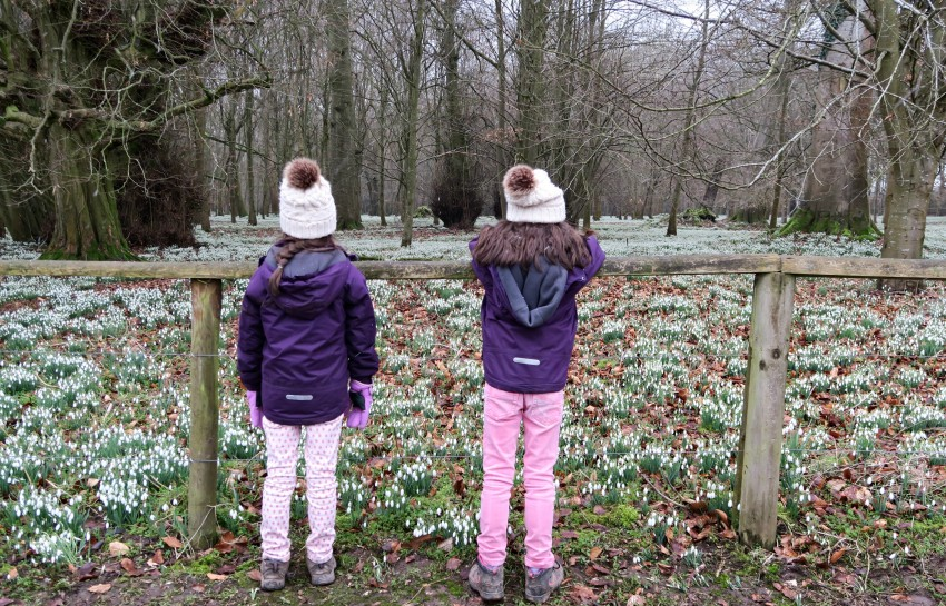 Welford Park Snowdrops