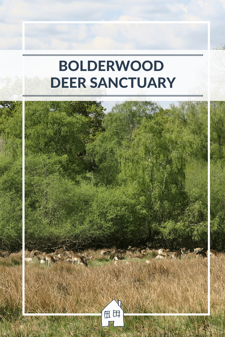 Bolderwood Deer Sanctuary in The New Forest is a perfect place to visit for a picnic and run around the forest. With a herd of Fallow deer to spot too. It is very peaceful and a perfect picnic spot in Hampshire