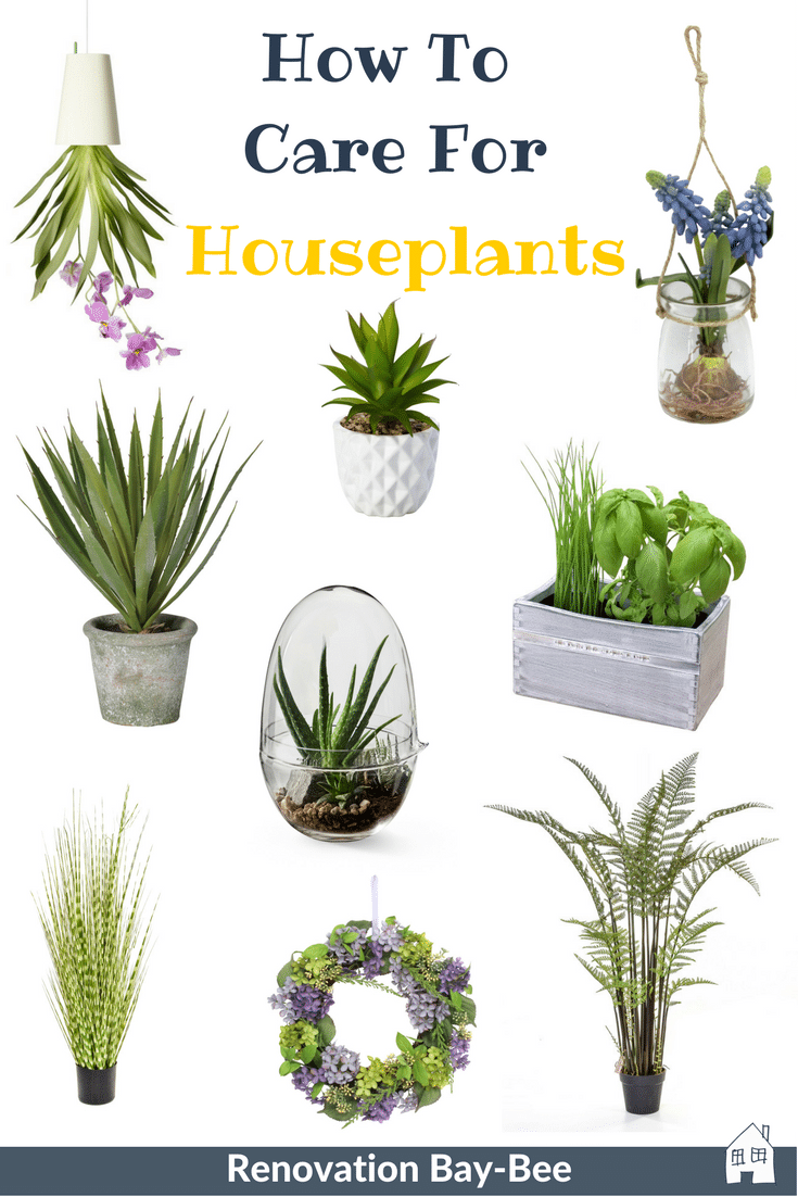Houseplants, here is a few easy tips on how to care for houseplants. Houseplants can brighten your home, make it feel alive, bring in colour. If your looking for houseplants that are easy to care for, succulents, large houseplants or small see my favourite ones